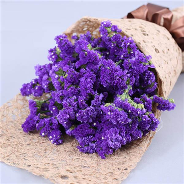 精心挑选紫色勿忘我